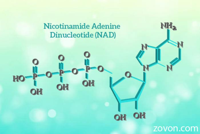 nicotinamide adenine dinucleotide nad sources functions side effects & faqs