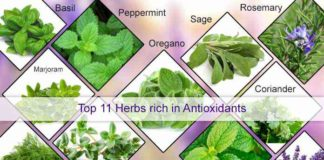 source of Top_11_Herbs_rich_in_Antioxidants_.
