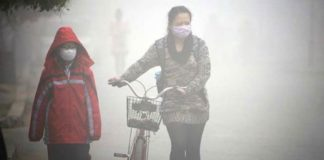 bones too are affected by smog study says