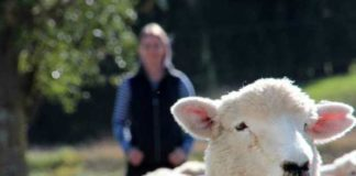 facial recognition research in sheep can enhance understanding of huntingtons disease