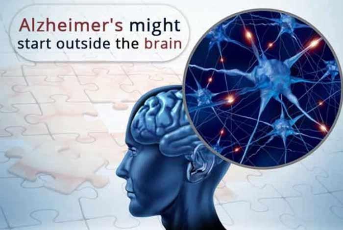 alzheimers disease might start outside the brain