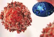 dna nanorobots programmed to combat cancer by searching and destroying tumors