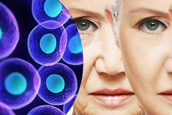 stem cells how do they work as an active antiaging agent