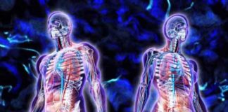 interstitium scientists discover the largest organ in human body