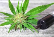 why cannabidiol is becoming so popular even if it doesnt get you high