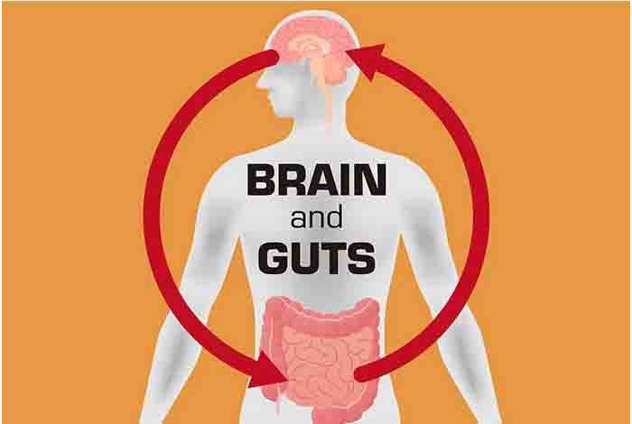 how gut bacteria affects our brains
