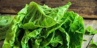 romaine lettuce linked e coli outbreak makes Its way to new U.S states