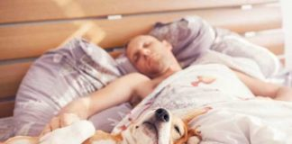 sleeping with your dog is not that great latest study reports