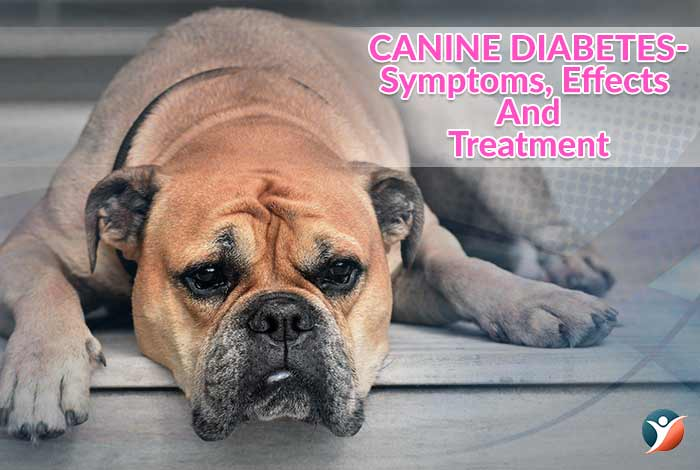 diabetes in dogs or canine diabetes