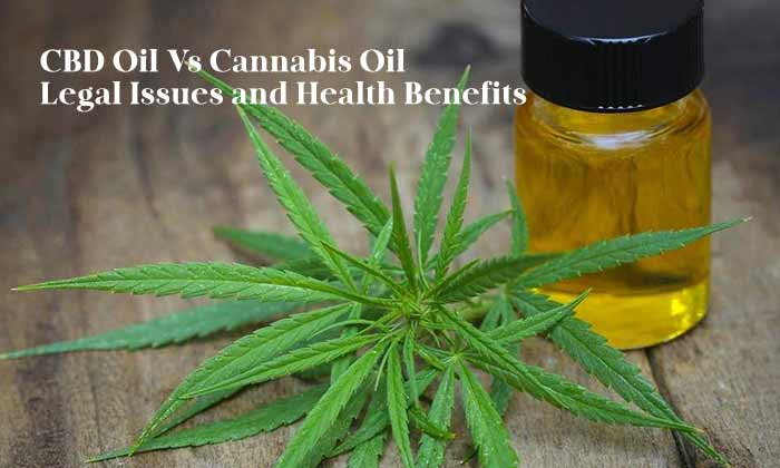 A Comprehensive Overview of CBD and Cannabis Oil