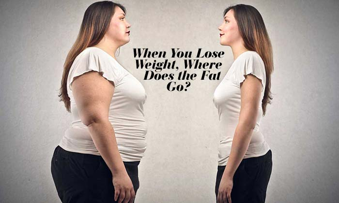 When You Lose Weight, Where Does the Fat Go?