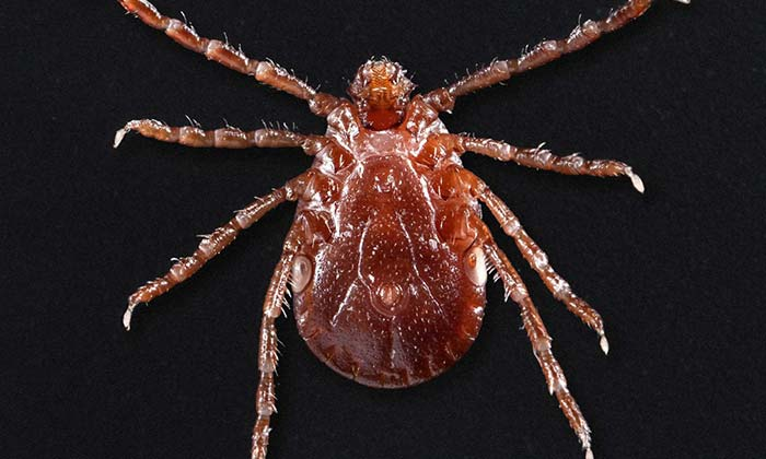 The Scary New Reason to Avoid Ticks: Have Hit Amost Half of the U.S.