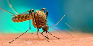 malaria parasites being resistant to drug