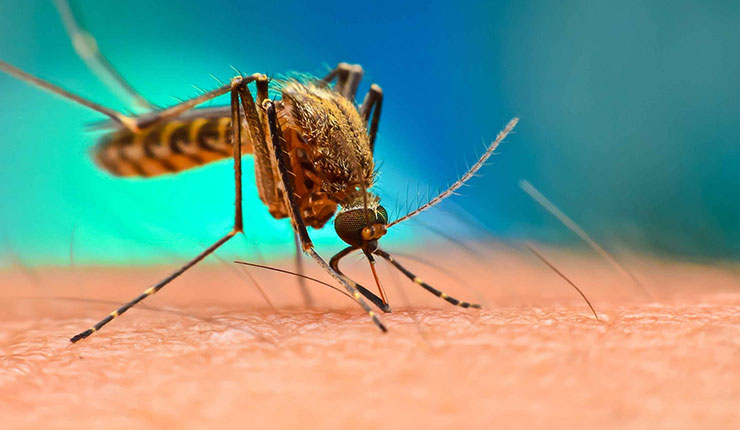 malaria parasites being resistant to drug